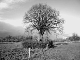 Het historische 'moordkruis' verscholen in het landschap.